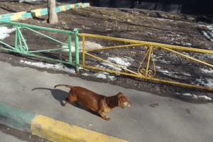 В районе Чертаново Северное пройдет вакцинация домашних животных от бешенства