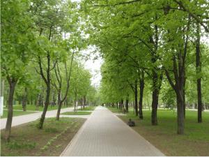 В Школьном парке района Чертаново Северное