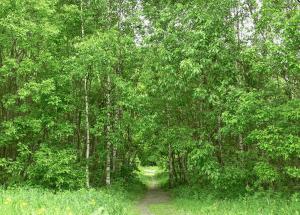 В Битцевском лесу