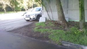 Газонное покрытие Чертановской улице, дом 7, корпус 1А