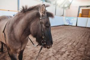 В секции иппотерапии детей лечат с помощью лошадей