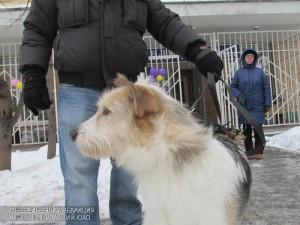 Бесплатную вакцинацию животных проведут в районе 31 марта