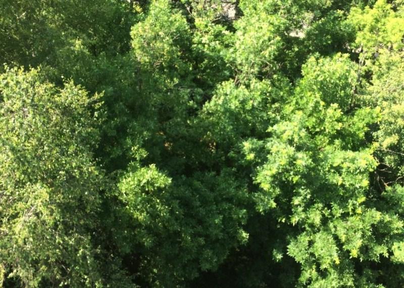 Деревья в районе очистили от сухостоя