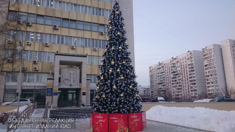 Русская ель появится на территории лицея №1158